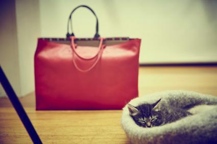 Bolsa roja y gatito dormido
