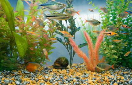 Acuario lleno de peces tropicales
