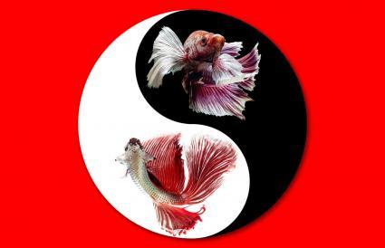 Yin Yang: Armonía y Equilibrio