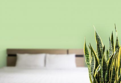 Habitación verde con lengua de la suegra