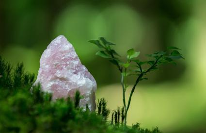 Cuarzo rosa en un bosque en Suiza