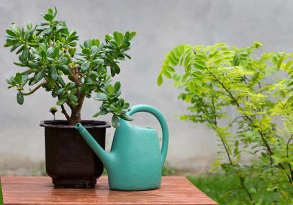 Planta y lata de agua en la mesa del jardín