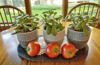 Tomates rojos maduros con plantas de jade