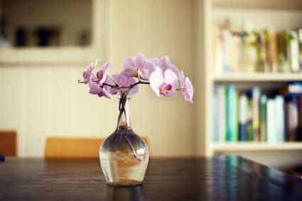 Orquidea rosa en el salón