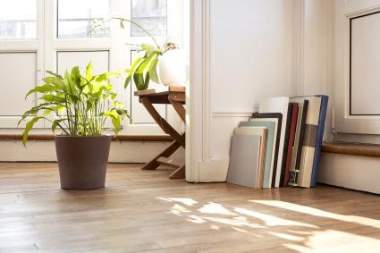 Plantas y libros en un rincón con sol