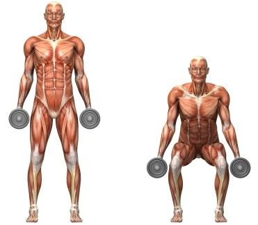 Anatomically Correct Squats
