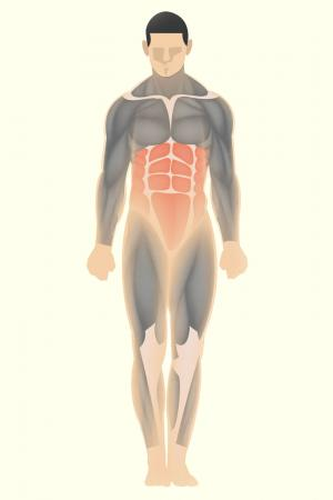 Core body muscles