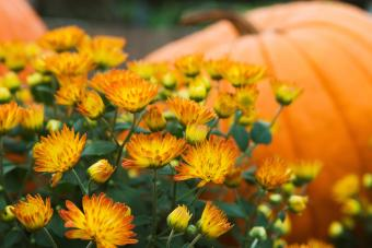 50+ Fall Activities to Spice Up the Season With Fun