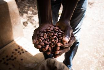Man Holding Cacao Beans