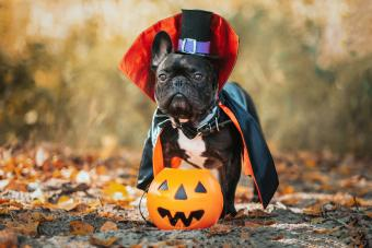 39 Cute Halloween Quotes to Celebrate All Hallows' Eve