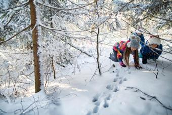 Kids tracking animal prints in winter forest
