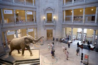 The Smithsonian's Natural Museum of Natural History