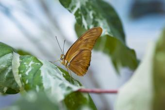 Butterfly at Conservatory of Flowers, Golden Gate Park