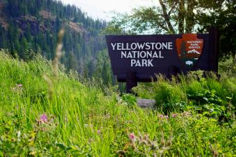 The Yellowstone National Park Welcome Sign Surrounded by Forest and the Rocky Mountains