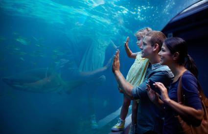 family enjoying a day at the aquarium