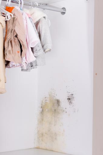 Mold in wardrobe
