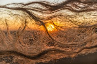 flax fibers