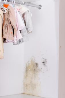 Mold in wardrobe