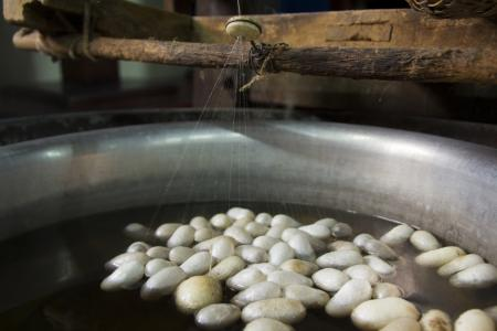 silk farming