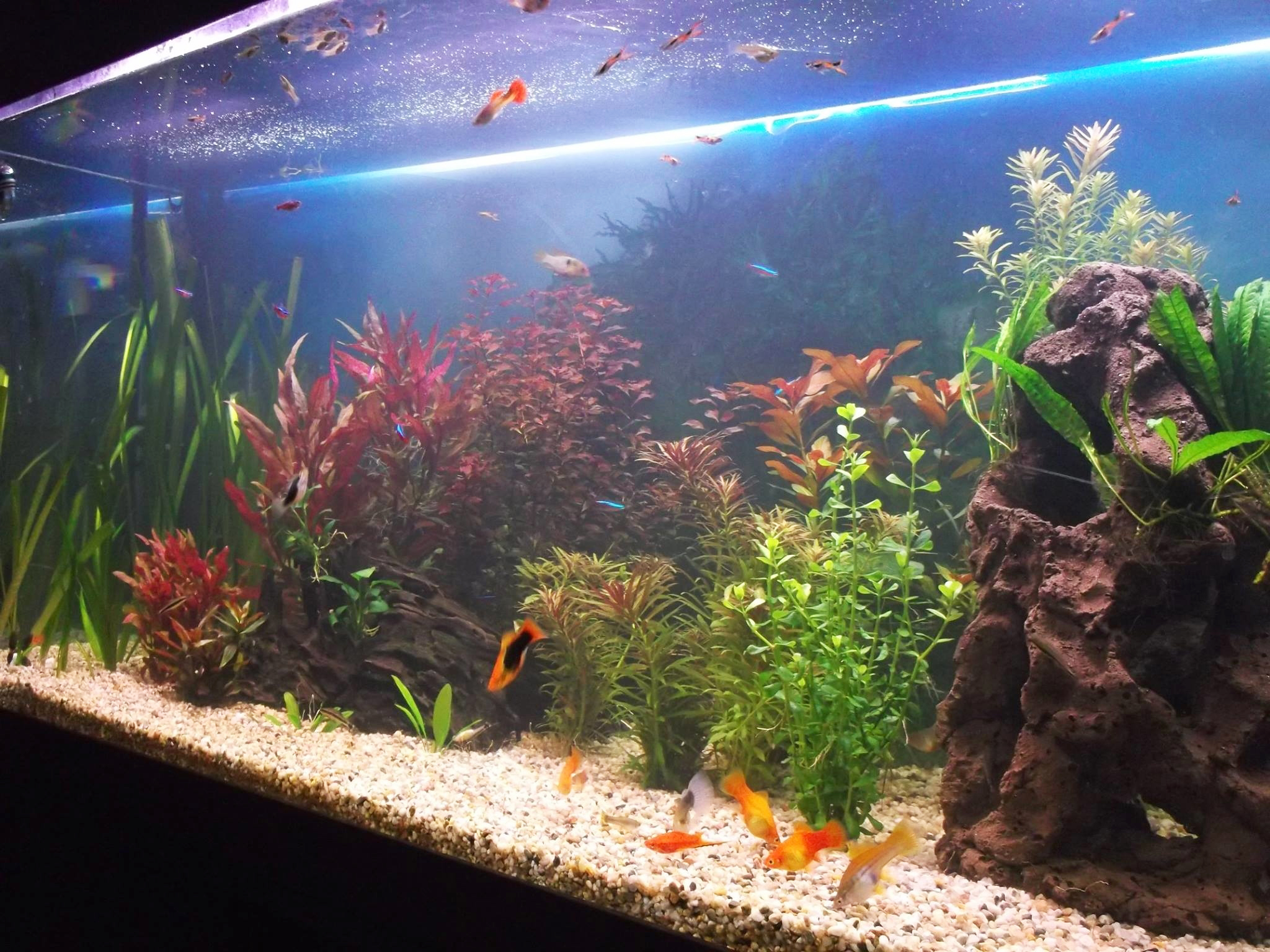 Feng Shui Aquarium Placement And Design Lovetoknow