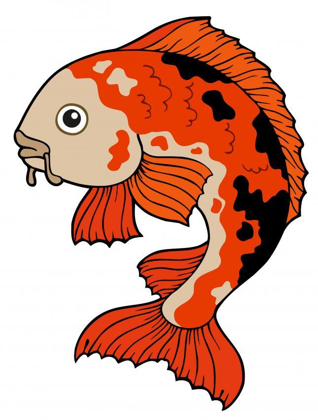 9 Beautiful Koi Fish Drawings Lovetoknow
