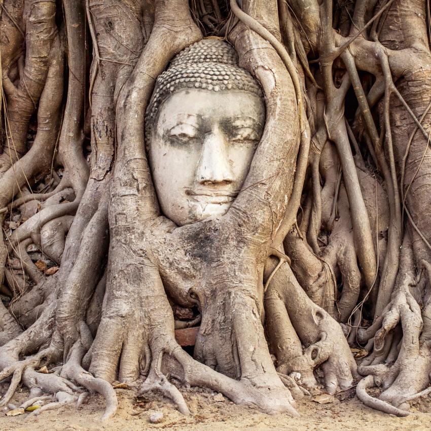 https://cf.ltkcdn.net/feng-shui/images/slide/239138-850x850-tree-roots.jpg