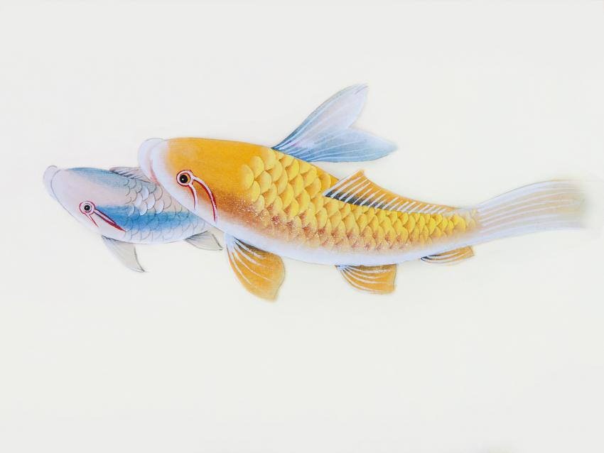 https://cf.ltkcdn.net/feng-shui/images/slide/248678-850x638-blue-and-gold-koi-fish.jpg