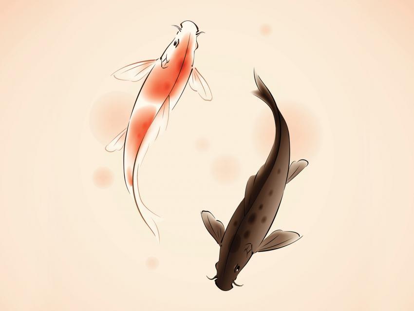 https://cf.ltkcdn.net/feng-shui/images/slide/248919-850x638-yin-yang-koi-fish.jpg