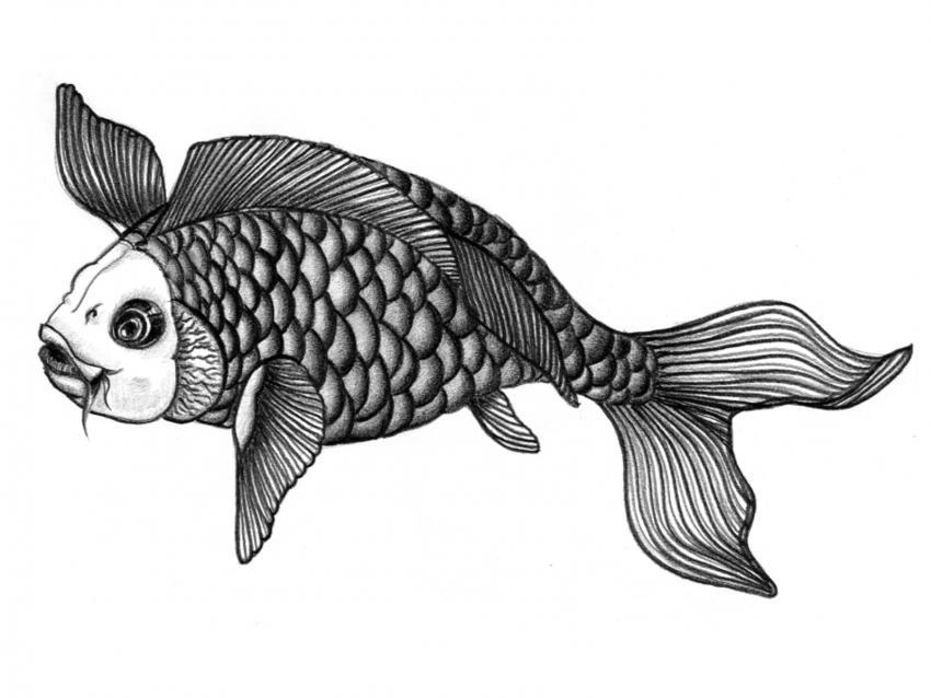 https://cf.ltkcdn.net/feng-shui/images/slide/248920-850x638-black-and-white-koi-fish.jpg