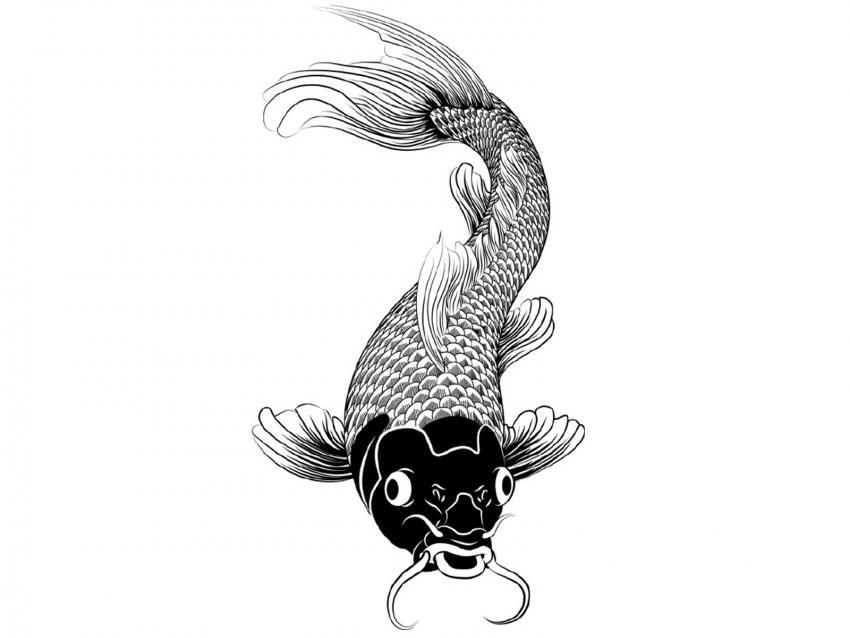 https://cf.ltkcdn.net/feng-shui/images/slide/248921-850x638-black-ink-koi-fish-drawing.jpg