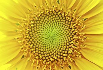 Understanding the Fibonacci Number Sequence