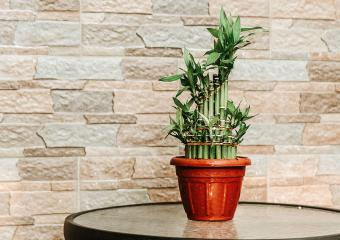 10 Beautiful Pictures of Lucky Bamboo Arrangements