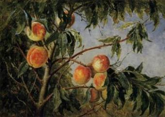 Peach Tree Print on Canvas