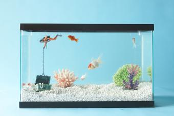 Fish tank in blue room