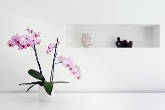 Orchid plant and ornaments