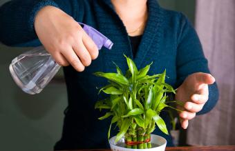 How and When to Use Fertilizer With Lucky Bamboo