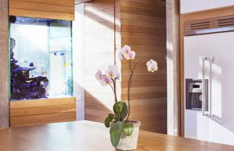 Feng Shui Kitchen Plants and Flowers
