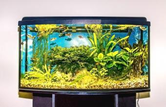 Clean fish aquarium