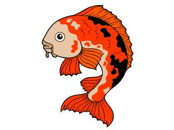 15 Beautiful Koi Fish Drawings