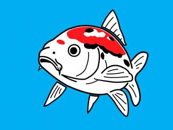 https://cf.ltkcdn.net/feng-shui/images/slide/248922-850x638-koi-fish-on-blue-background.jpg