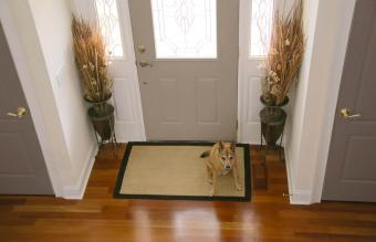 Dog patiently waiting by the foyer