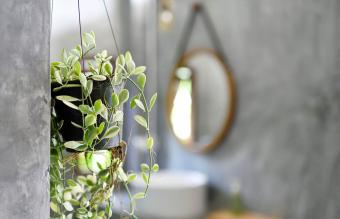 Best Bathroom Plants for Favorable Feng Shui