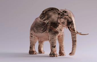 Elephant with trunk down