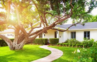 What a Tree in Front of a House Means in Feng Shui