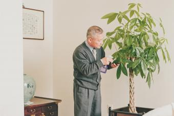 Money Tree Meaning and Placement in Feng Shui