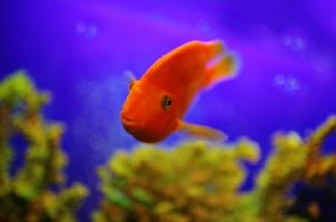 Feng shui lucky number of fish in a tank lovetoknow for Feng shui fish tank