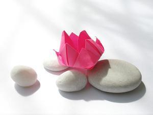 rocks and lotus
