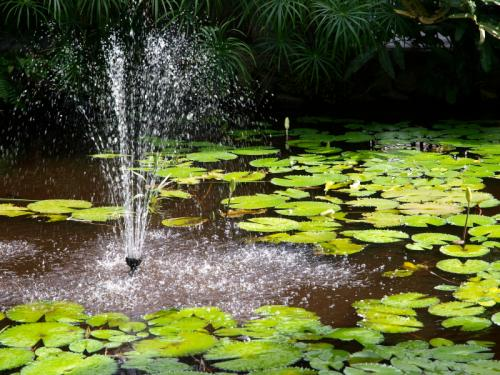 Fountain In Lily Pond