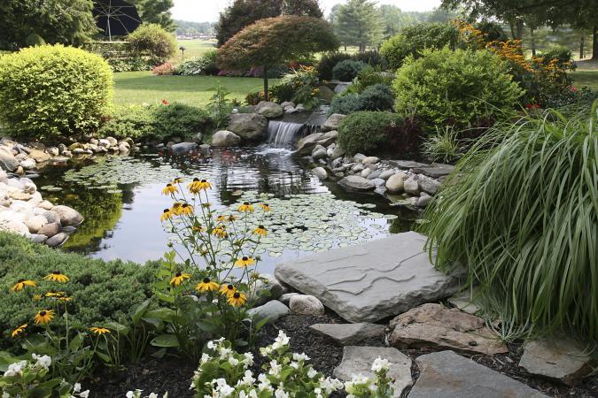 Koi pond in backyard