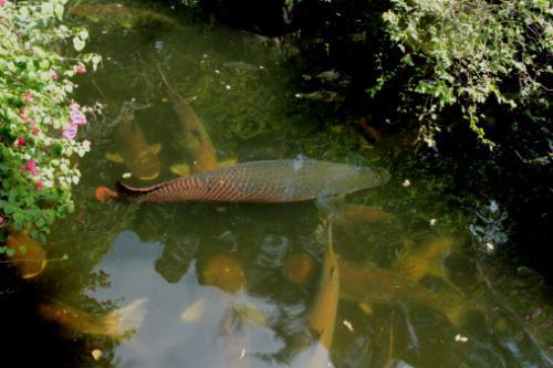in a pond habitat